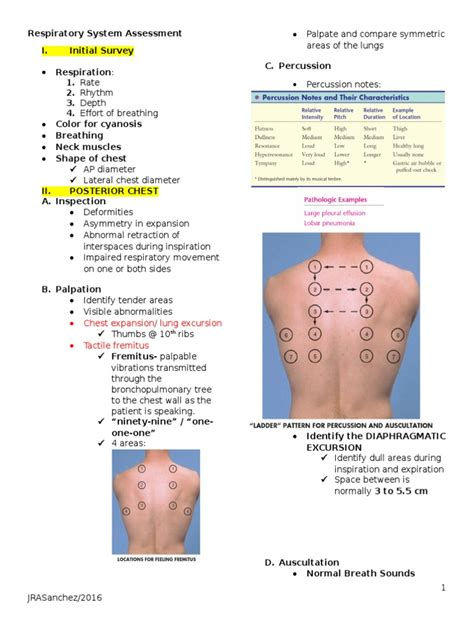 sound pattern synonym list of synonyms and antonyms of the word diaphragmatic
