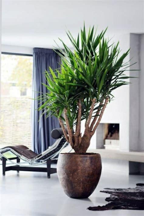 Wohnzimmer Blumen by Palmlilie Yucca Wohnzimmer Liege Pelzteppich Pflanzen