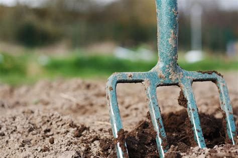 digging bed digging how to build a better veggie bed modern farmer