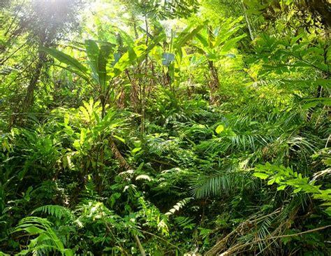 dschungel pflanzen dschungel wald pflanzen stockfoto colourbox
