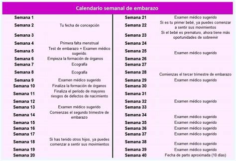 Calendario Por Semana Calendario Semanal Embarazo Calendarios Embarazo