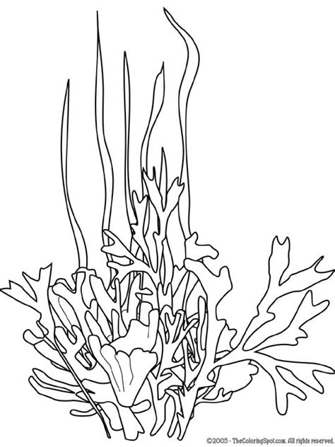underwater plants coloring pages seaweed google search line drawings for literacy
