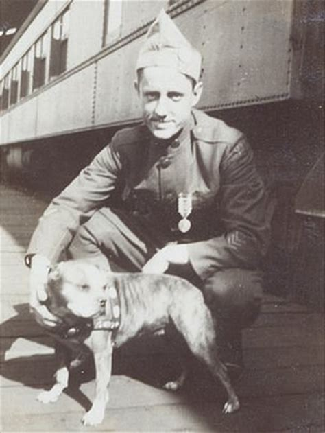 Sergeant Stubby In Ww1 Schools Who Was Stubby