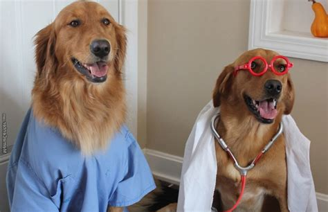 Dog Doctor Meme - preprofessional cats and dogs college of natural science