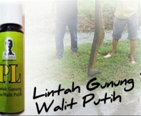 Minyak Lintah Tulen menjual produk malam pertama pl lintah gunung