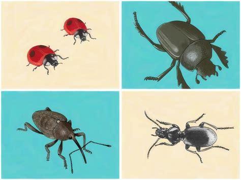 coleotteri volanti formicarium it leggi argomento aiuto per invasione di