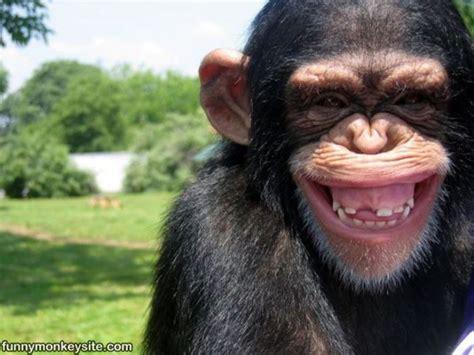Chimp Meme - whaaa hahaha funny monkey pictures