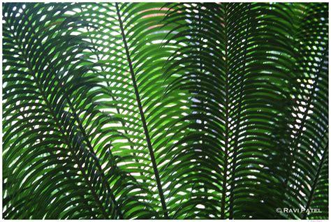 palm leaf grid photos by ravi