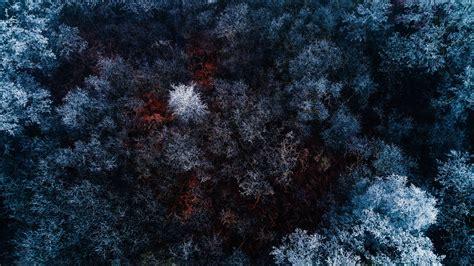 frozen macbook wallpaper wallpaper frozen forest 4k nature 6377