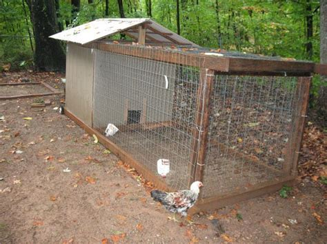 backyard chickens for sale backyard chickens for sale for sale special combo your eggs or breeds listed