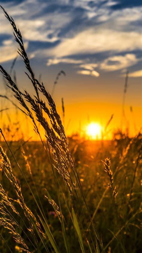 summer sunset   wallpaper hd wallpaper background