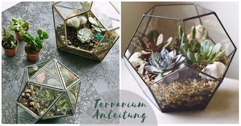 Mini Terrarium Selber Bauen 2156 by Mini Terrarium Selber Bauen Terrarium Selbst Bauen Oder