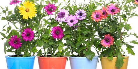 piante da vaso resistenti al freddo piante da esterno in vaso resistenti al freddo