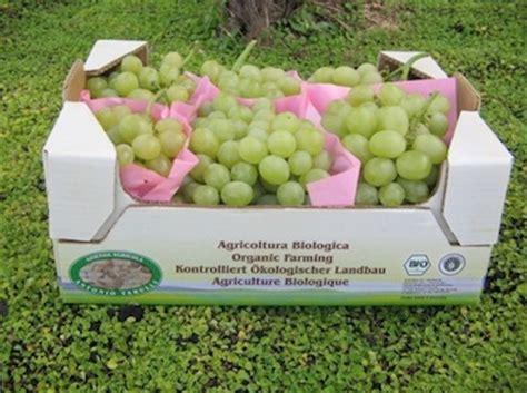 uva da tavola pugliese 15 176 congresso sull uva da tavola agronotizie vivaismo