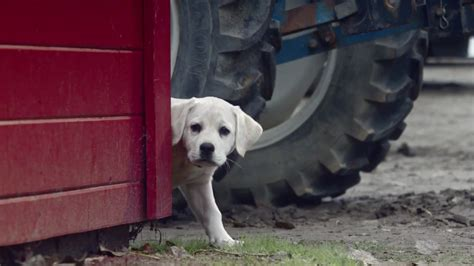 budweiser unleashes  lost dog super bowl ad hoping  catch lightning  adweek