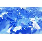 Blue Flower Wallpaper Collection For Free Download