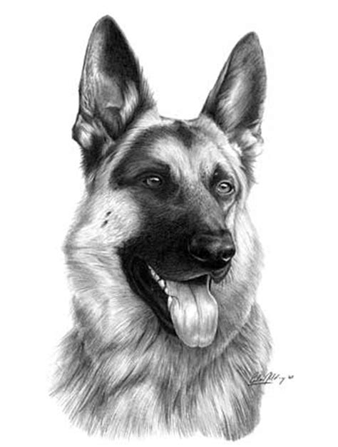 german shepherd puppy drawing images for gt easy sketches of german shepherd dogs