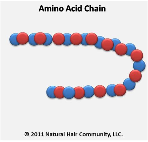 Dijamin Kiehls Amino Acid Shoo 65ml how to use amino acids in hair products amino acid chain hair blogs articles