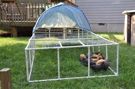 Backyard Chickens Book Build A Pvc Chicken Tractor