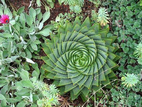 succulent garden coach photos page 2