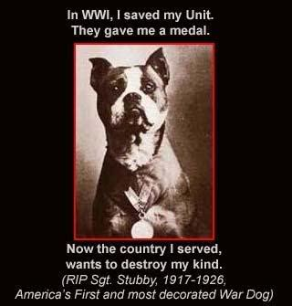 Sergeant Stubby Medals S Pitbull Rescue Sgt Stubby America S And Most Decorated War Was A Pit Bull