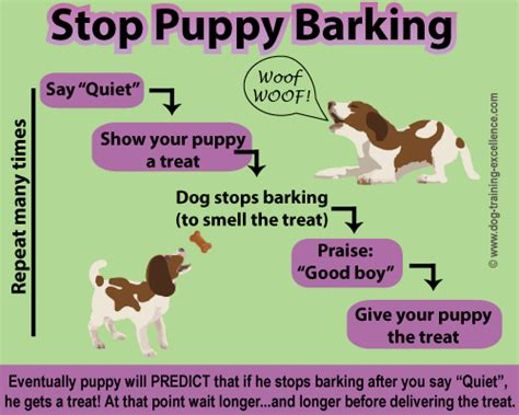 how to your to stop barking on command signals a picture guide