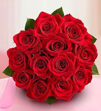 One Dozen Roses by One Dozen Roses Bouquet Only By 1 800 Flowers The