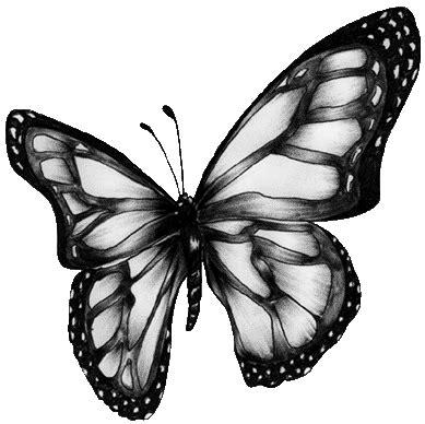 imagenes de mariposas blancas y negras dibujos de marip 242 sas coloridas imagui