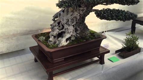 ubi jesi raduno nazionale istruttori ubi bonsai garden europa jesi