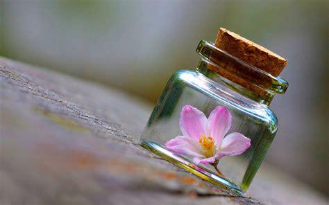 hd themes jar flower on the bottle wallpaper pc wallpaper wallpaperlepi