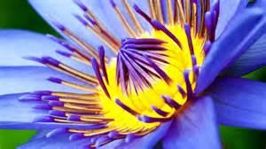 diaporama gt la beaut 233 des fleurs en 20 photos