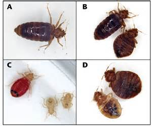 nmsu sleep tight don t let the bed bugs bite practical