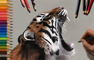 what color is a tiger speed drawing tiger jasmina susak