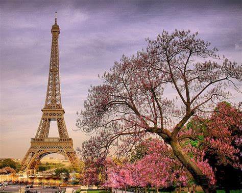 libro paris in bloom likefun me paris eiffel tower in spring bloom