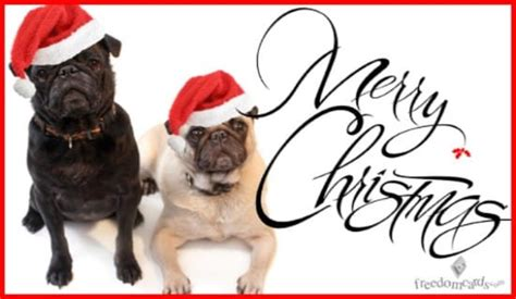 merry christmas christmas dogs ecard  holidays cards