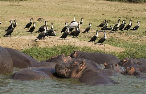 queen elizabeth national park uganda wildlife queen elizabeth national park uganda wildlife
