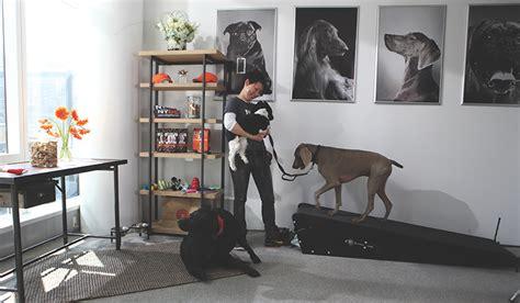 Bike Shop Floor Plan going to the dogs profitable pet friendly amenities