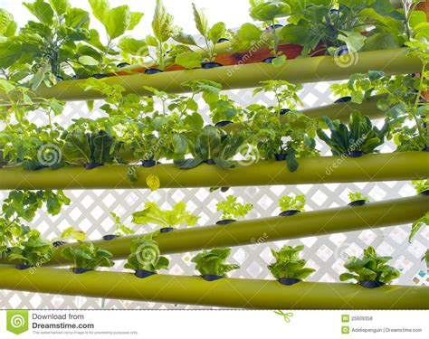 hydroponic vertical earth garden stock photo image 25609358