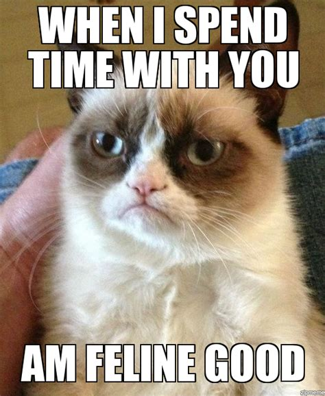 Cat Memes Generator - grumpy cat meme generator driverlayer search engine