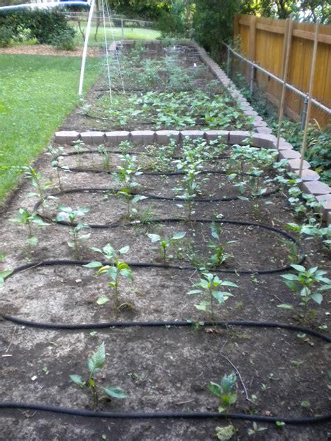 Soaker Hose Irrigation Vegetable Garden Image Gallery Soaker Hose