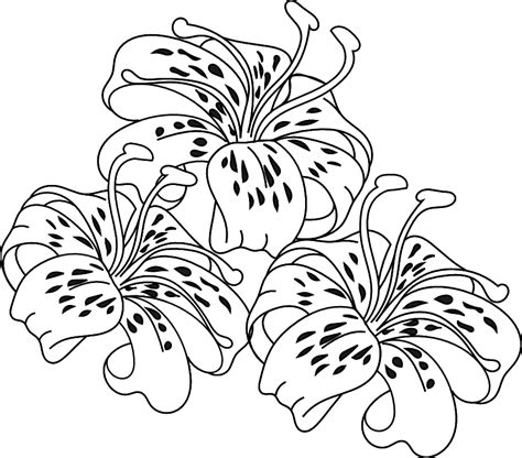 Tiger Lilly Coloring Pages