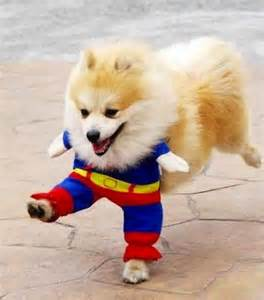 16 cute and adorable dogs dressed up as superheroes