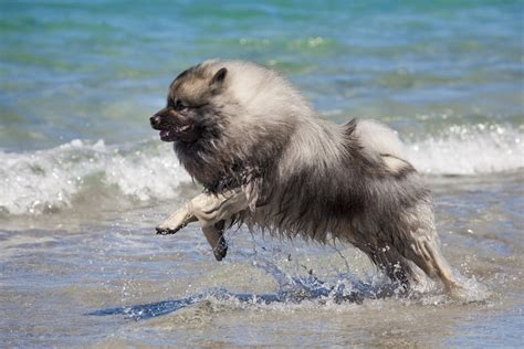 dog vs boat these are the friendliest dog breeds