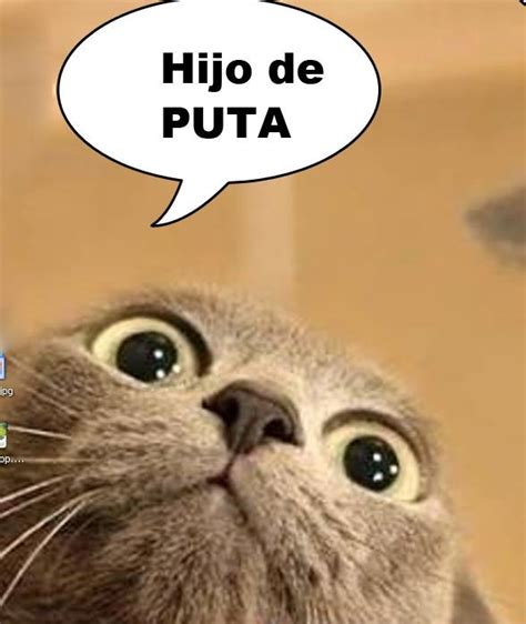 imagenes tiernas groseras meme gato grosero gomanevername