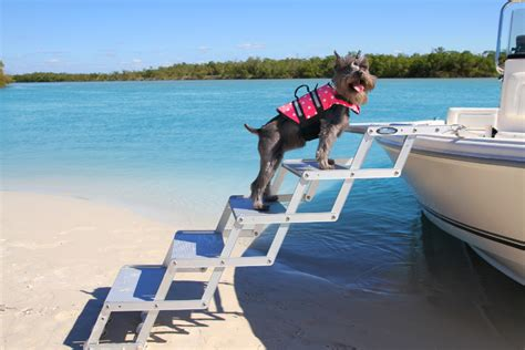 boat dog steps bow to beach ladders