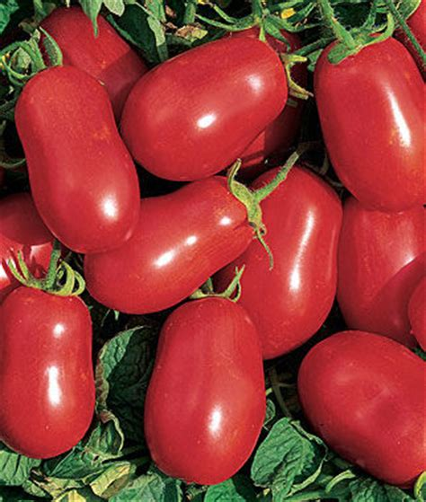 Tomato Roma Vf roma vf tomato seeds and plants vegetable gardening at