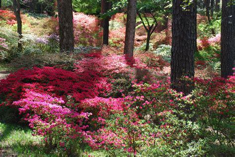 Callaway Gardens by Callaway Gardens What Grows There Hugh Conlon