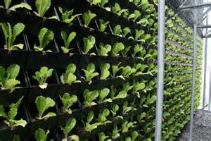 Flower Shop Iowa City - vertical farming systems bing images