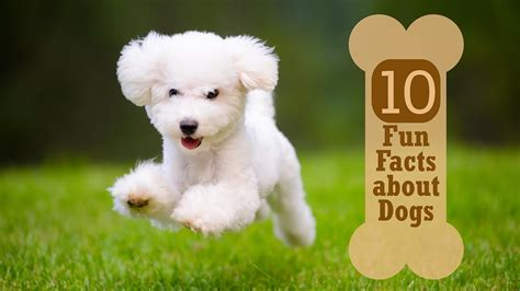 10 Facts About Dogs by 10 Facts About Dogs