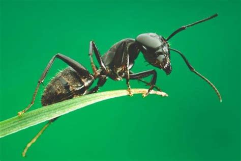 imagenes de la vida de las hormigas las hormigas c 243 mo son qu 233 comen que tipos hay y d 243 nde